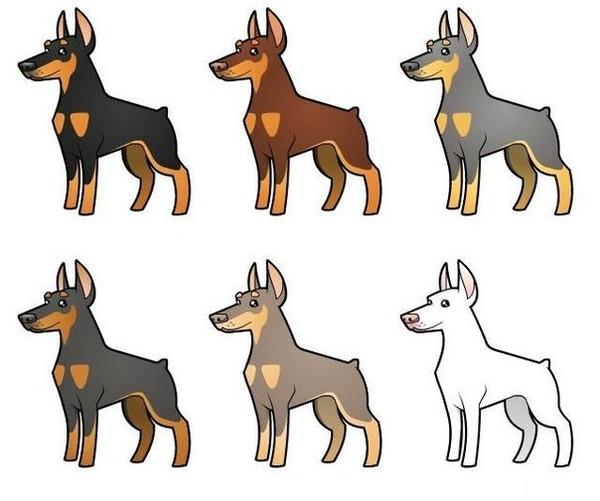Характеристика собак породы Доберман белого окраса